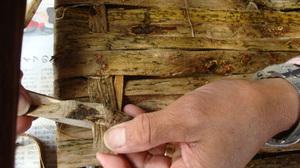 20111113_local_inner_bark_stool_076