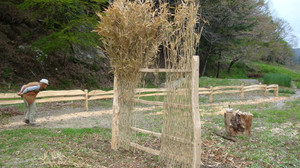 20120501_new_fence_and_cherry_blo_3