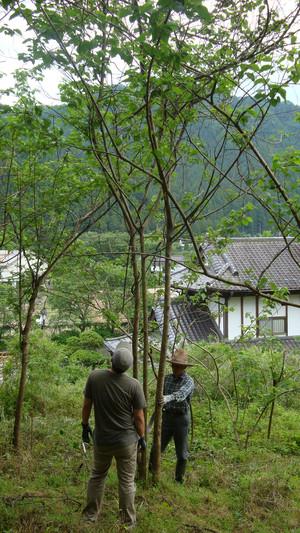 20120619_innerbark_harvesting_002