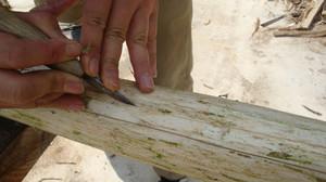 20120619_innerbark_harvesting_032