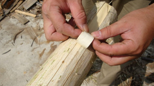 20120619_innerbark_harvesting_033