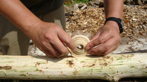 20120619_innerbark_harvesting_036
