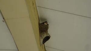 20120810swallow_childdren_001