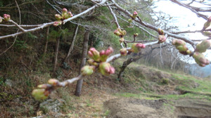20130404_new_woods_came_002