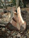 2005new_wood_005