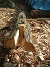 2005new_wood_006