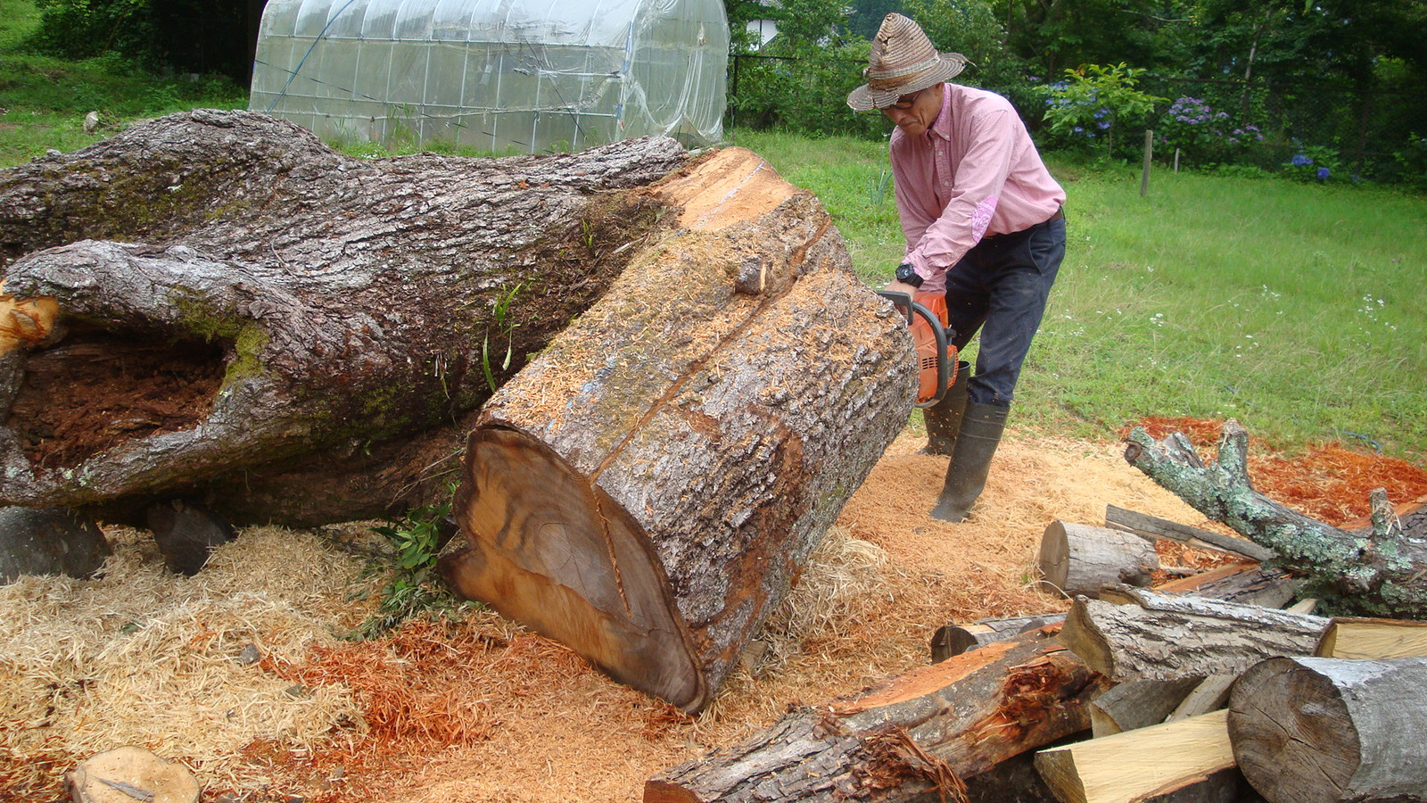 20160715the_cherry_sawing_001